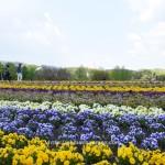 春の花回廊!弁当持ち込みでのんびり癒されてきました(笑)