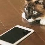 iPhoneでソフバン『Eメール(i)』を利用中の方は設定確認を!SSL対応強化で送受信規制始まります